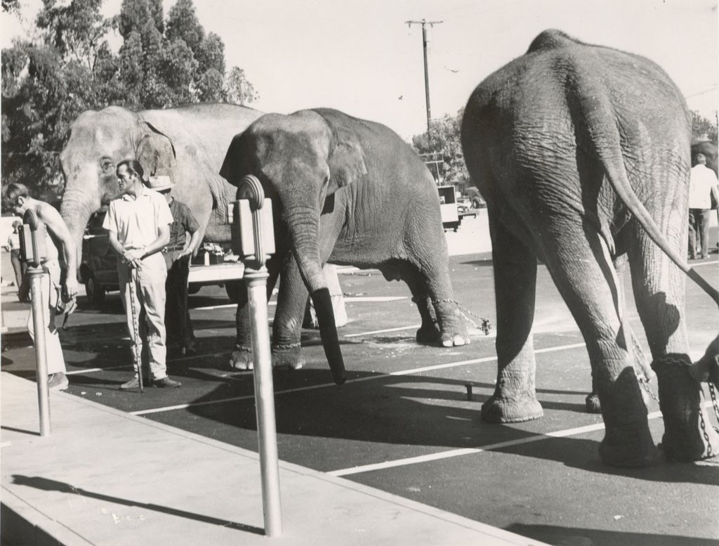 Image result for elephant at a parking meter